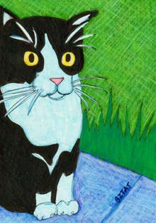 Black-white-tuxedo-cat-feral-drawing