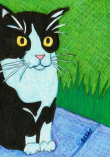 Black-white-tuxedo-cat-feral-drawing